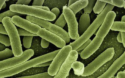 La microbiota hace frente al Coronavirus