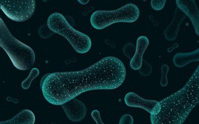 La microbioma intestinal identifica el cáncer de recto